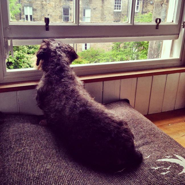 harris at window 2